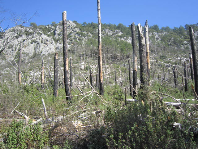 Broken down trees, near the top