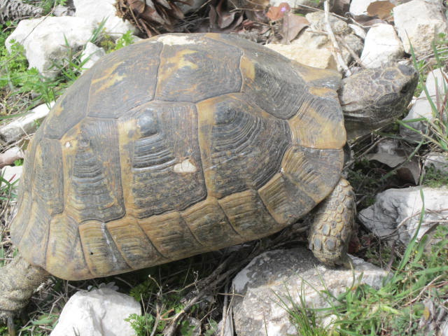 Turtle! Even bigger than the last
