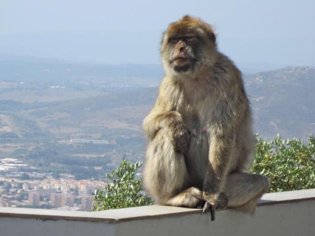 Stoic monkey in Tarifa