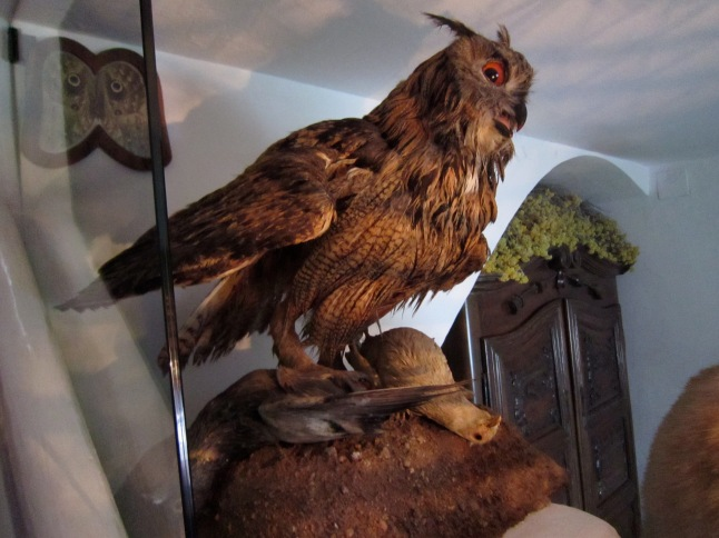 Scary taxidermied birds