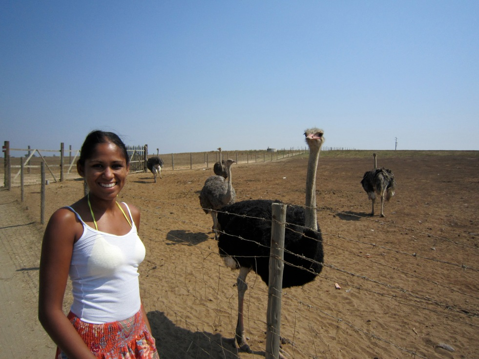 My first ostrich sighting!