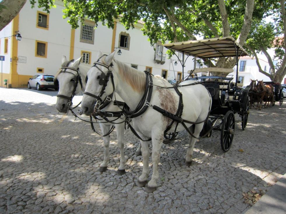 Horses in Evora, Portugal