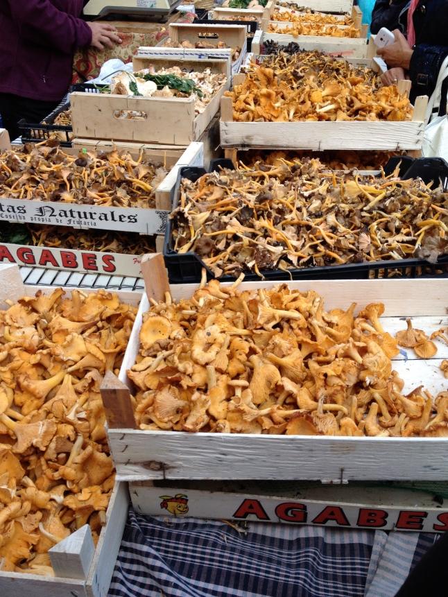 Mushrooms galore!